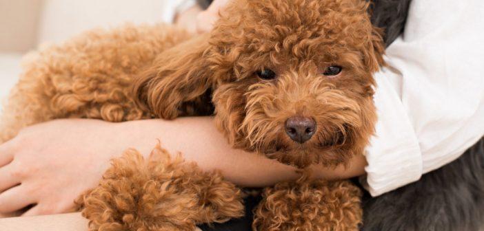 Perché il padrone non deve assistere alla toelettatura del cane? Forse non ci crederete, ma la risposta è; per il benessere del cane stesso!