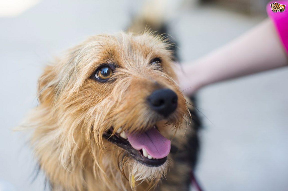 Il padrone non deve assistere alla toelettatura, solo così al suo ritorno il cane sarà felice e fiducioso