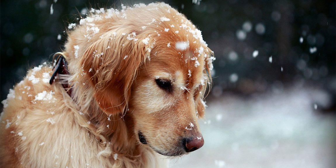 Si possono lavare i cani anche d'inverno o è pericoloso per la loro salute?