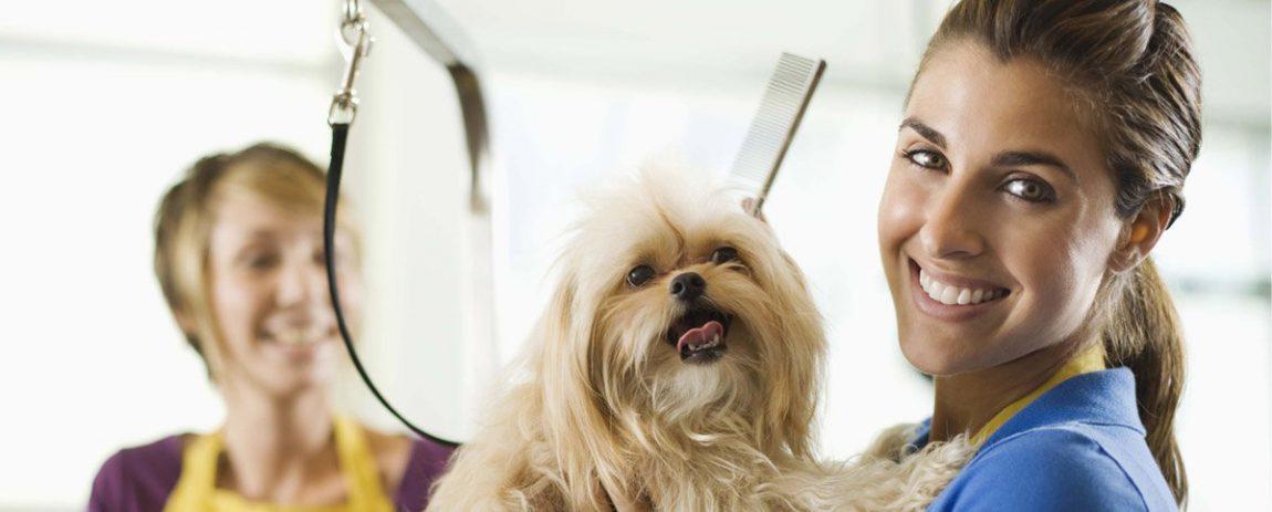 Per diventare toelettatore occorre seguire un buon corso di pet grooming