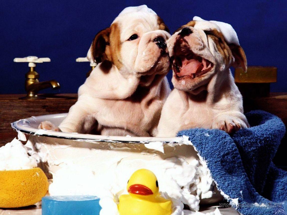 Fare il bagno al cane una volta al mese è una buona abitudine per la sua salute