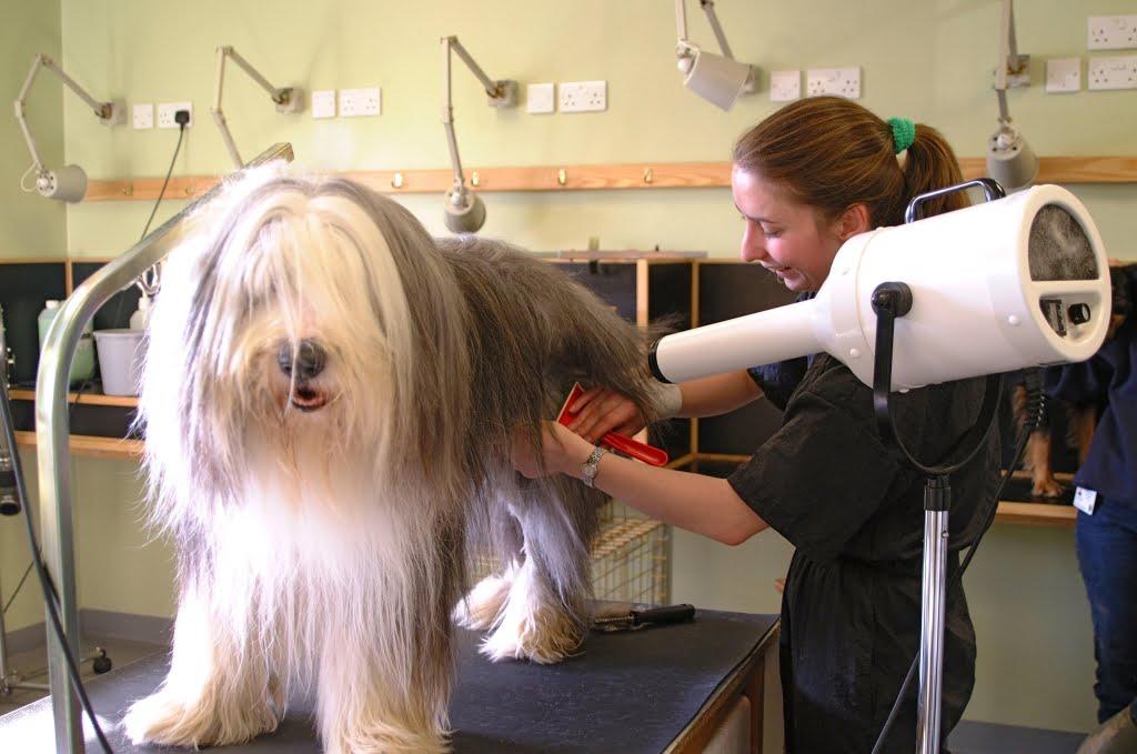 Lavare il cane con una certa frequenza è fondamentale per le razze a pelo lungo, come il bobtail