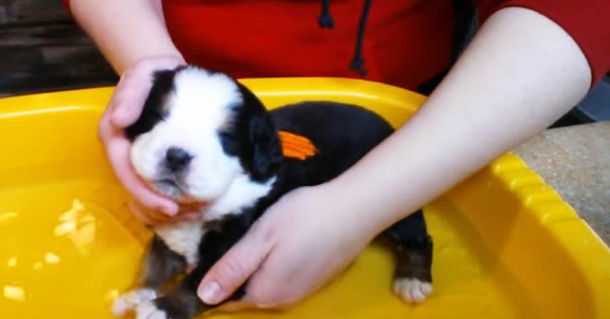A che età si può lavare un cucciolo di cane per la prima volta in toelettatura?
