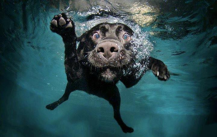 Cane Felice in acqua