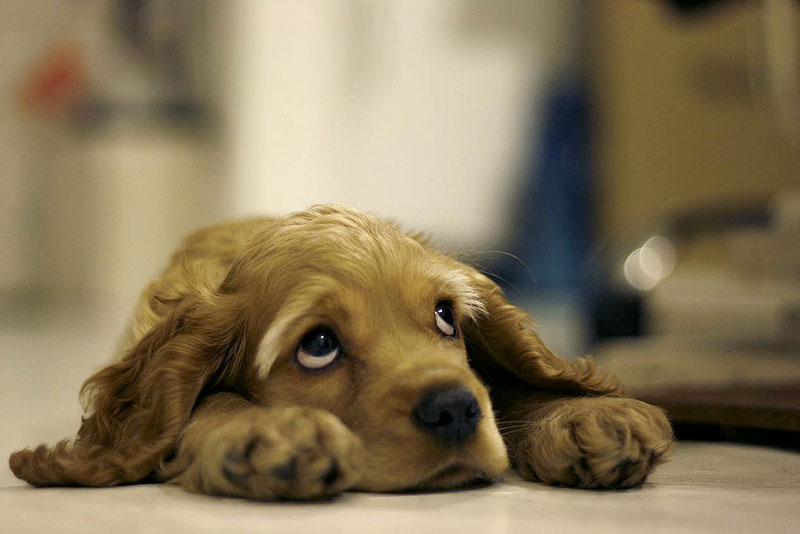 Cane paura in toelettatura