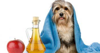 Lavare il cane con acqua e aceto? No, grazie.