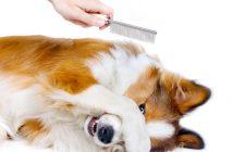 Come far affrontare l'ansia al proprio cane in toelettatura