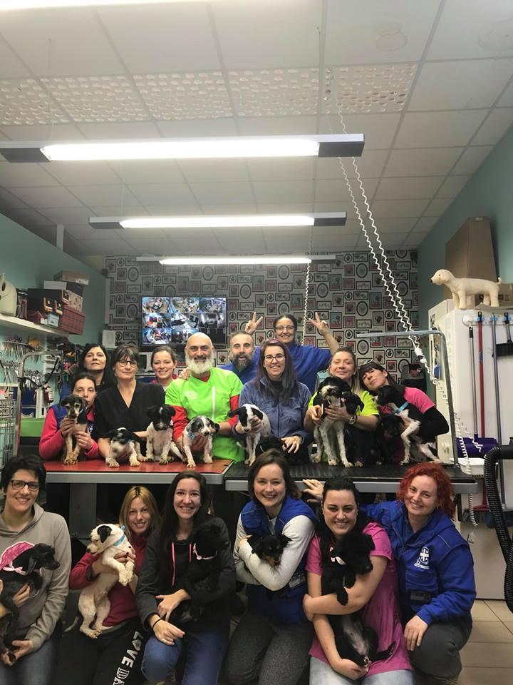Pets Negozio e Toelettatura, piscina , beauty farm, dog sitting a Preganziol Treviso