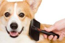 Come spazzolare un Cane