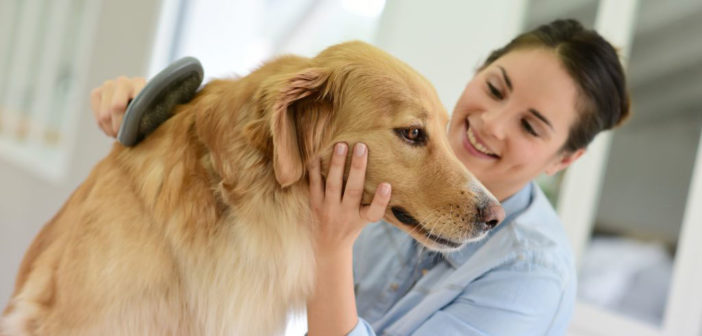 Come prendersi cura del proprio cane
