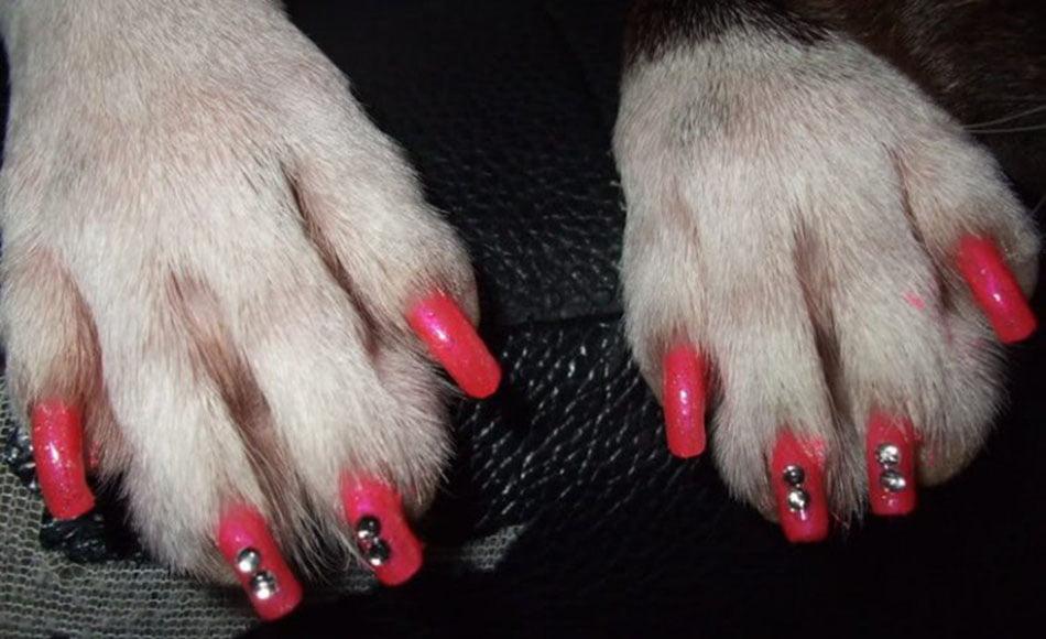 Zampicure e smalto per i cani, la nuova moda della Nail Art per Cani