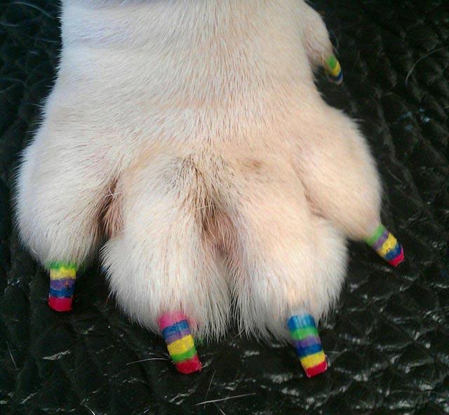 zampecure smalto per unghie cani nails zampicure