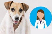 Lavare il cane secondo il veterinario