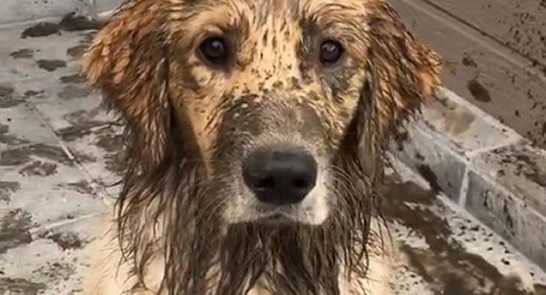 Cane Sporco di Catrame Fango Pece, come pulirlo in modo sicuro.