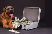 Costi apertura toelettatura per cani e gatti