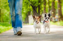 Passeggiata Cani al Guinzaio